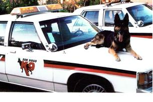San Diego K9 security patrol service